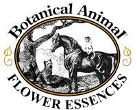 Botanical Animal Flower Essences