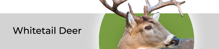 Whitetail Deer Products
