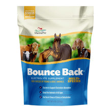 Bounce Back Multi-Species Electrolyte Supplement