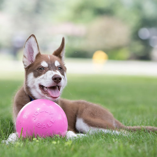 View larger image of Jolly Bounce-N-Play Dog Ball