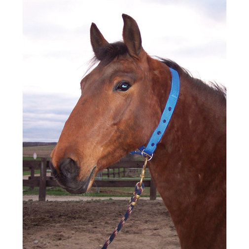View larger image of Horse Tamer Pro Collar