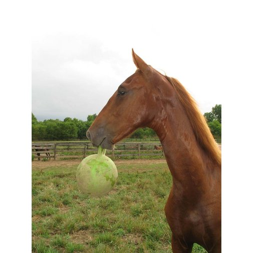 View larger image of Jolly Ball for Horses