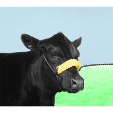 Poly Cattle Halter with Padded Nose Band